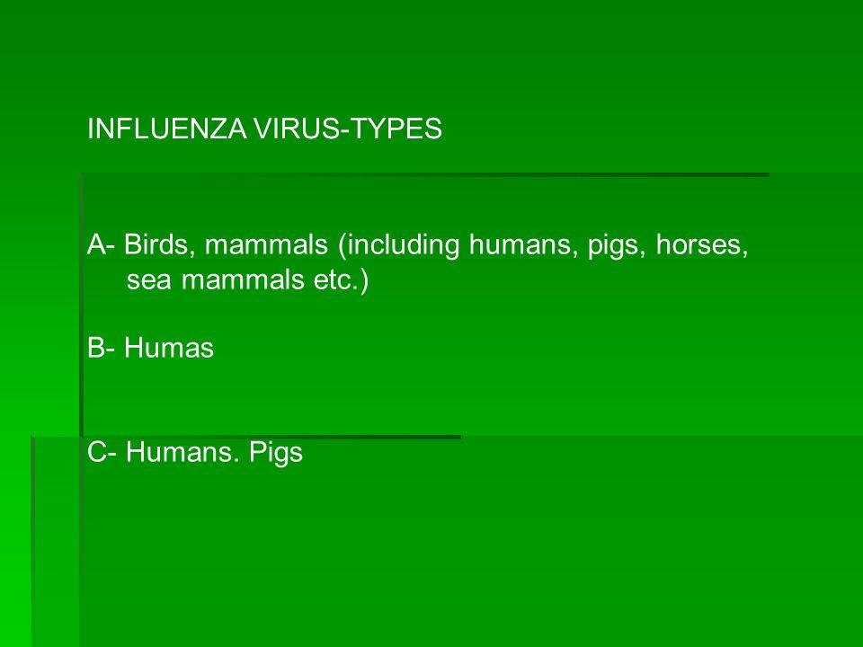 INFLUENZA VIRUS-TYPES A- Birds, mammals (including humans, pigs, horses, sea mammals etc.) B- Humas C- Humans. Pigs