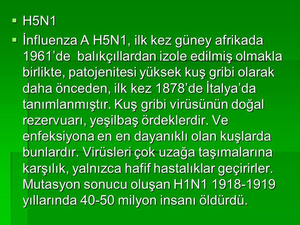  H5N1  İnfluenza A H5N1, ilk kez güney afrikada 1961'de balıkçıllardan izole edilmiş olmakla birlikte, patojenitesi yüksek kuş gribi olarak daha önc