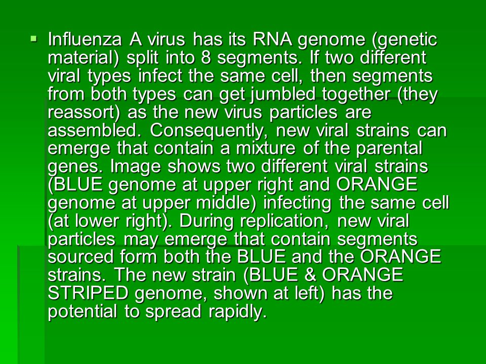  Influenza A virus has its RNA genome (genetic material) split into 8 segments.
