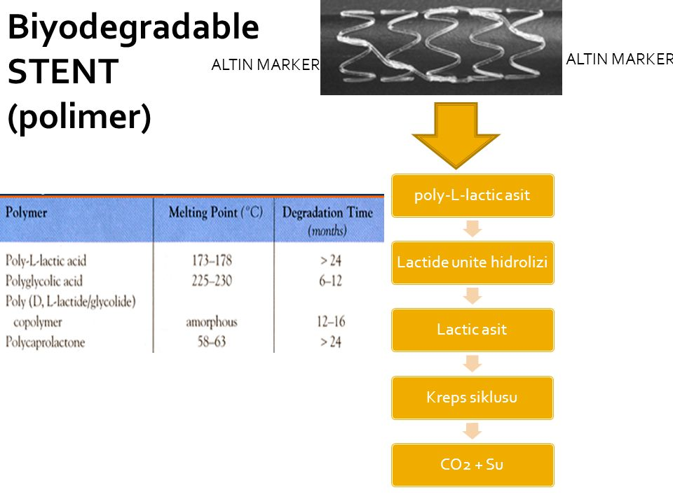 poly-L-lactic asitLactide unite hidroliziLactic asitKreps siklusuCO2 + Su Biyodegradable STENT (polimer) ALTIN MARKER