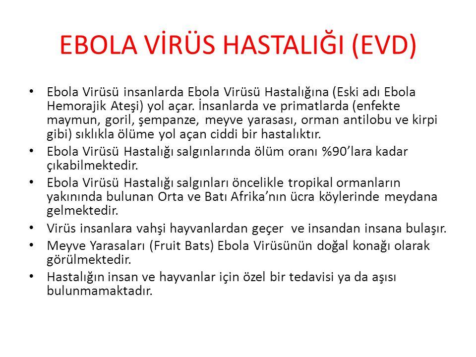 Ebola Virüsü insanlarda Ebola Virüsü Hastalığına (Eski adı Ebola Hemorajik Ateşi) yol açar. İnsanlarda ve primatlarda (enfekte maymun, goril, şempanze