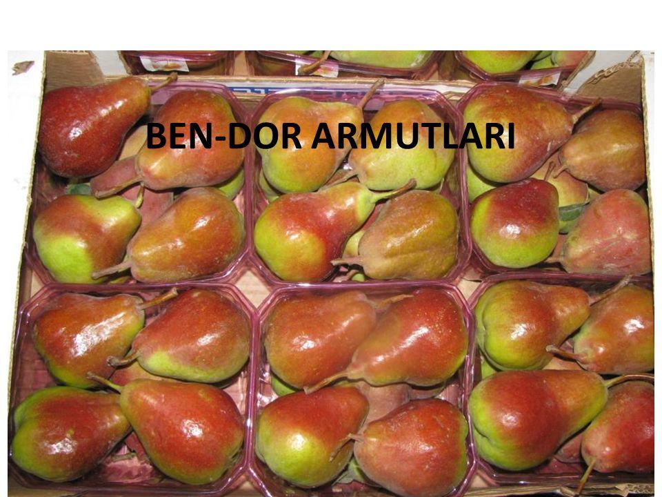 Nashi Armut Ben-Dor