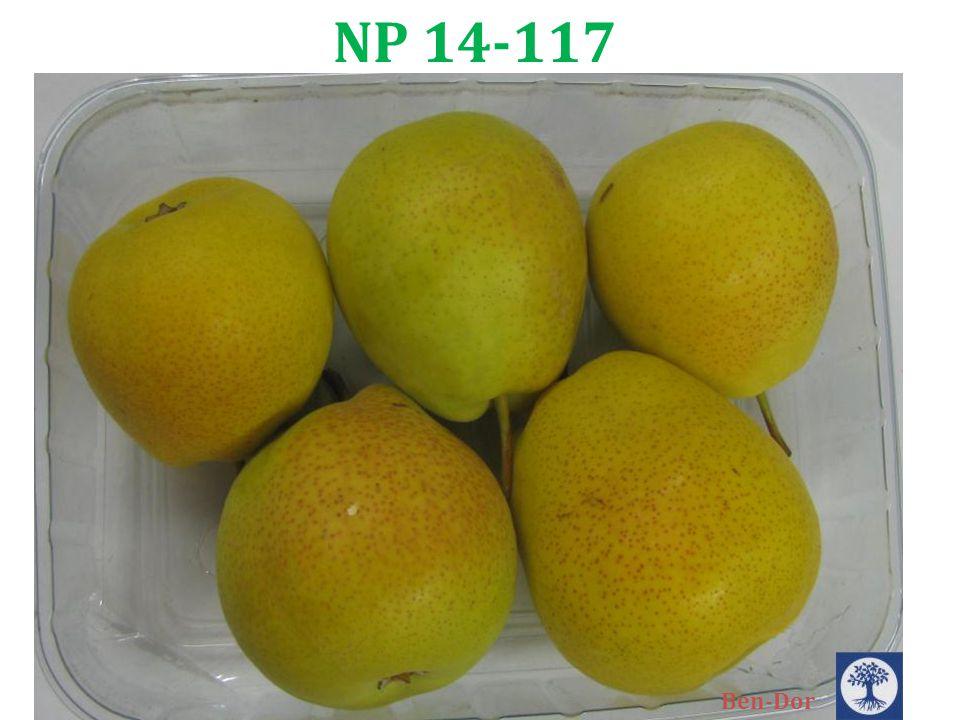 NP 14-117 Ben-Dor