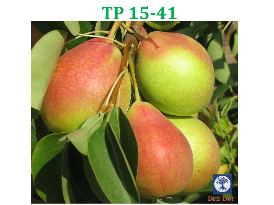 TP 15-41 Ben-Dor