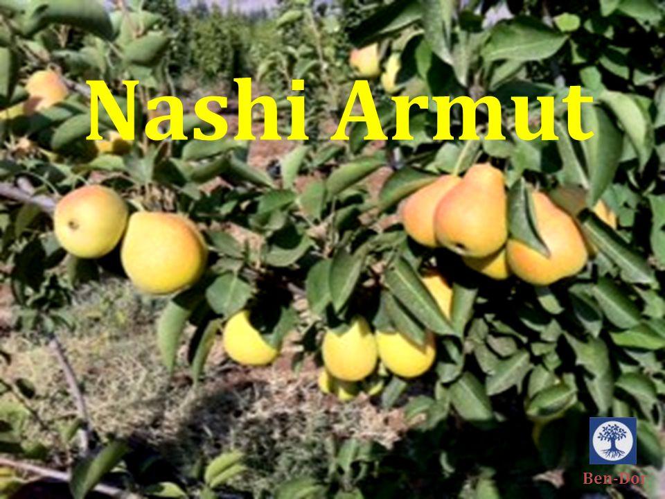 NP 14-117 ÇiçeklenmeVerimSoğuklanma Süresi Orta Meyve Verileri Ağaç Verileri NotBrix %Hasat ZamanıBoyut mm Hasat sonrası Kalitesi İyi1530/760-65