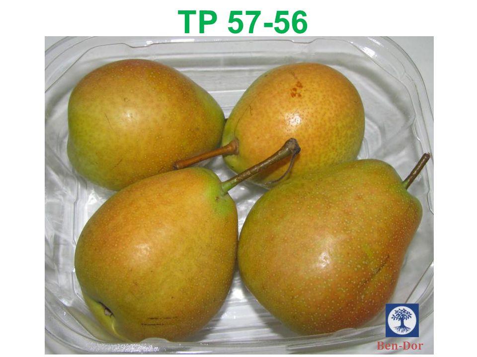 TP 57-56 Ben-Dor