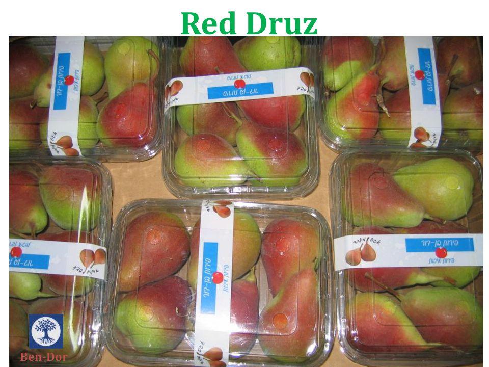 Red Druz Ben-Dor