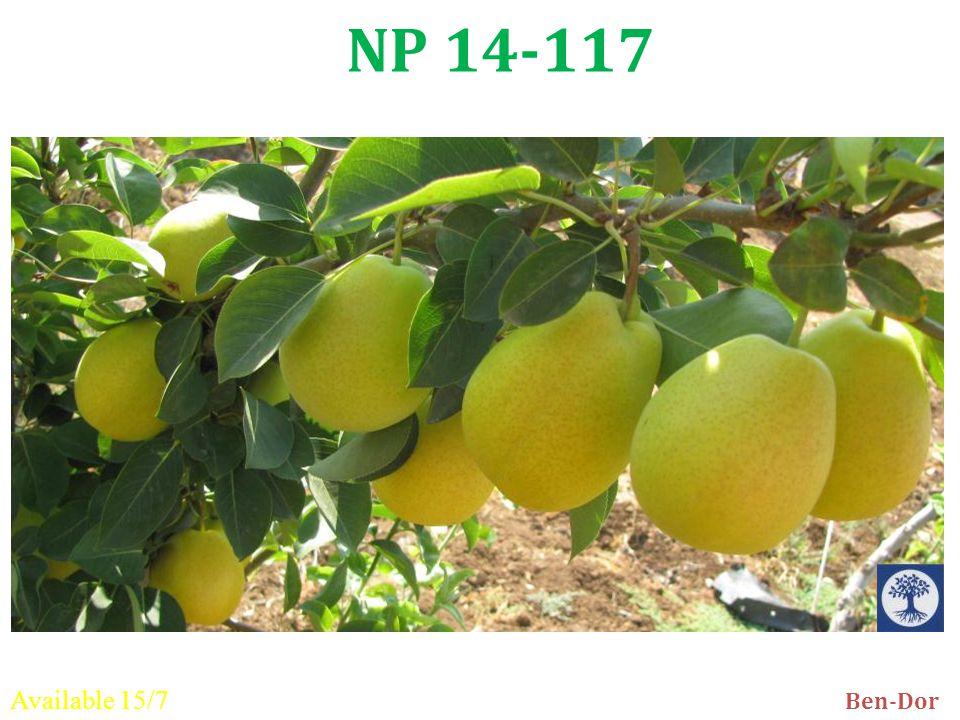 NP 14-117 Ben-Dor Available 15/7
