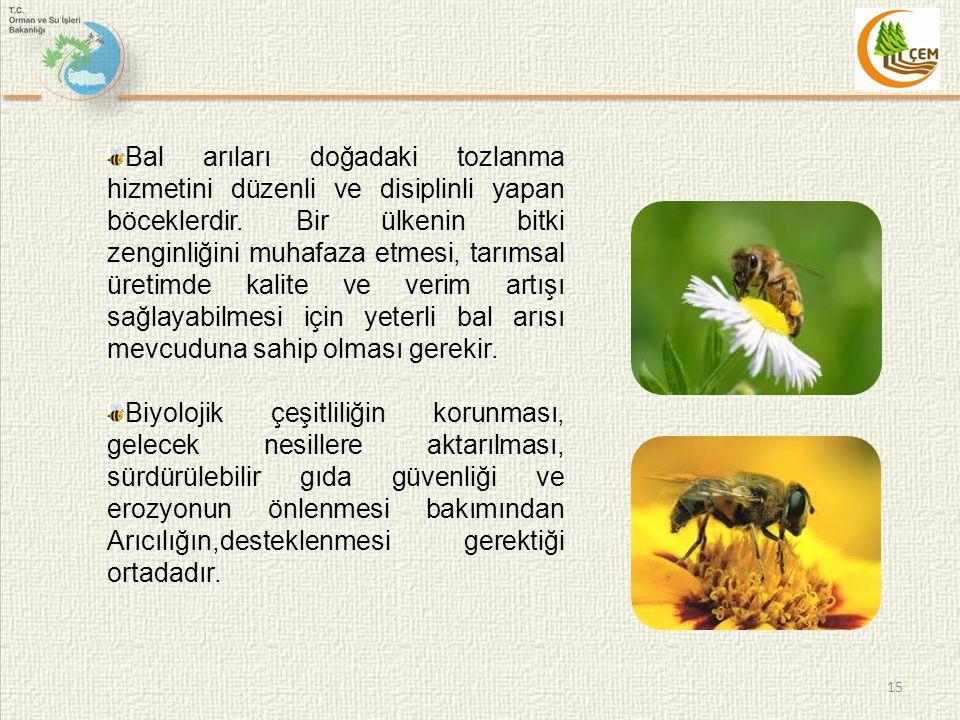 15 Bal arıları doğadaki tozlanma hizmetini düzenli ve disiplinli yapan böceklerdir.