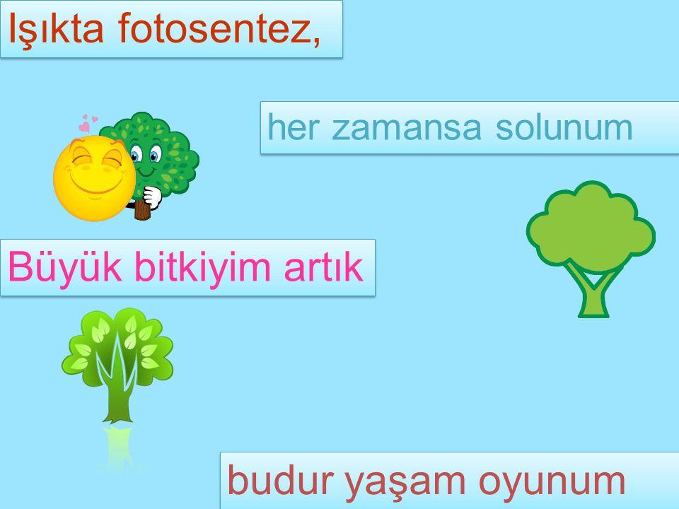 Işıkta fotosentez, her zamansa solunum Büyük bitkiyim artık budur yaşam oyunum