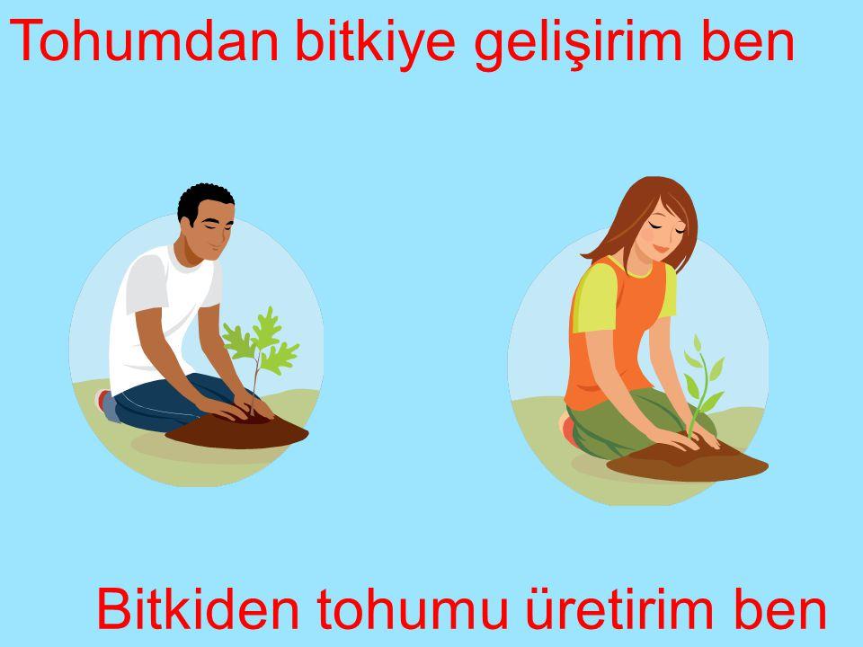 Bitkiden tohumu üretirim ben Tohumdan bitkiye gelişirim ben