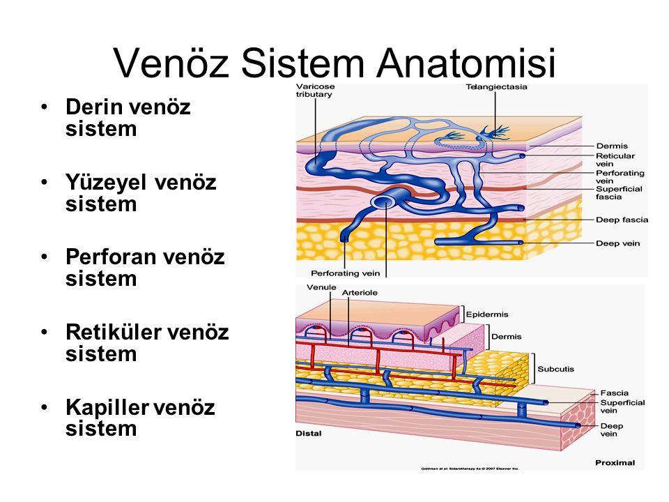 Venöz Sistem Anatomisi Derin venöz sistem Yüzeyel venöz sistem Perforan venöz sistem Retiküler venöz sistem Kapiller venöz sistem