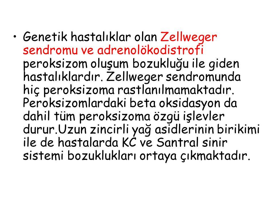 Genetik hastalıklar olan Zellweger sendromu ve adrenolökodistrofi peroksizom oluşum bozukluğu ile giden hastalıklardır. Zellweger sendromunda hiç pero