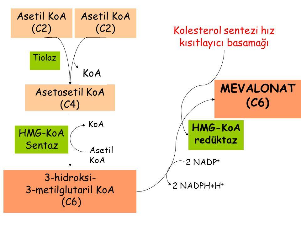 KoA Asetasetil KoA (C4) KoA Tiolaz Asetil KoA (C2) Asetil KoA (C2) Asetil KoA 3-hidroksi- 3-metilglutaril KoA (C6) HMG-KoA Sentaz HMG-KoA redüktaz MEV