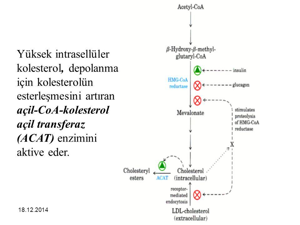 18.12.201450 Yüksek intrasellüler kolesterol, depolanma için kolesterolün esterleşmesini artıran açil-CoA-kolesterol açil transferaz (ACAT) enzimini a