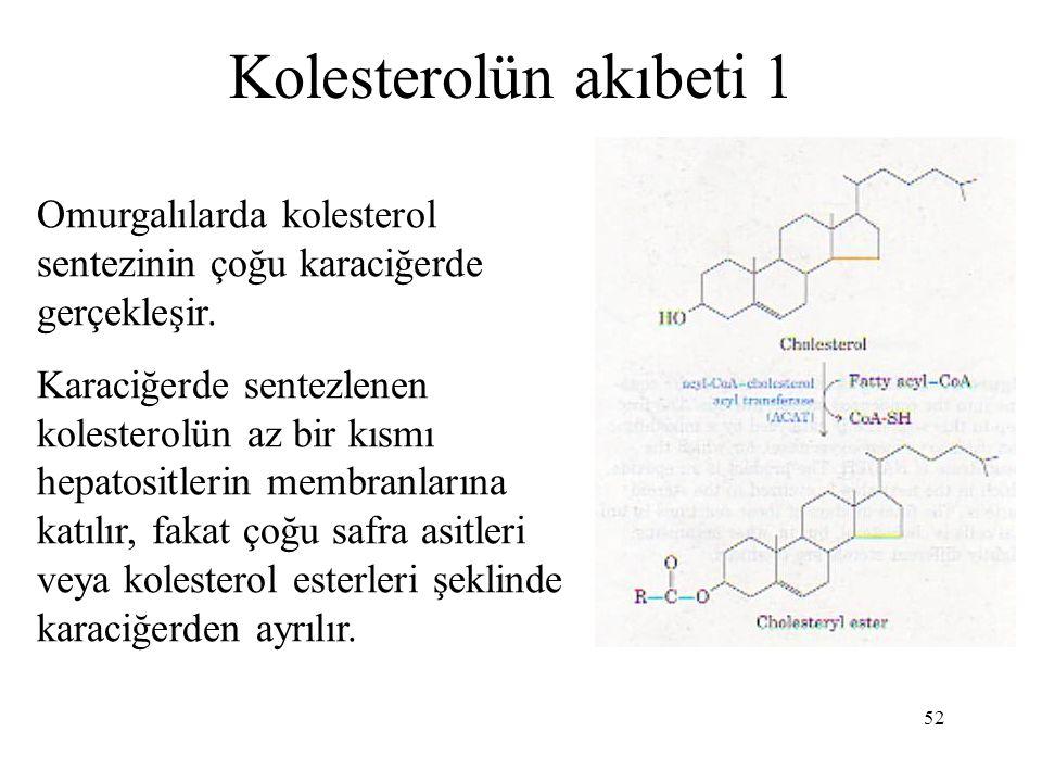 52 Kolesterolün akıbeti 1 Omurgalılarda kolesterol sentezinin çoğu karaciğerde gerçekleşir. Karaciğerde sentezlenen kolesterolün az bir kısmı hepatosi