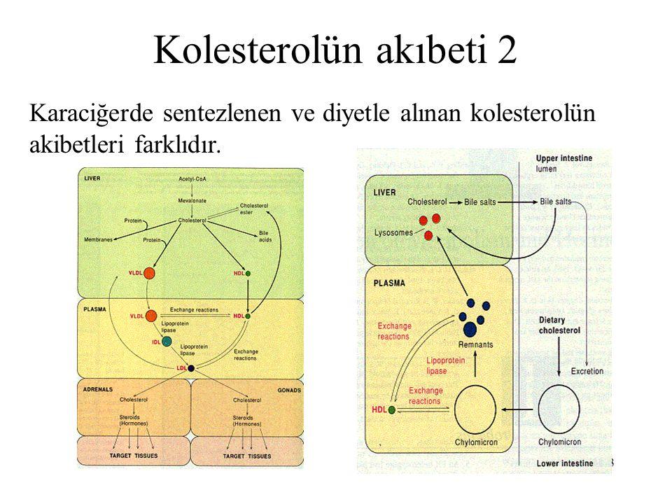53 Kolesterolün akıbeti 2 Karaciğerde sentezlenen ve diyetle alınan kolesterolün akibetleri farklıdır.