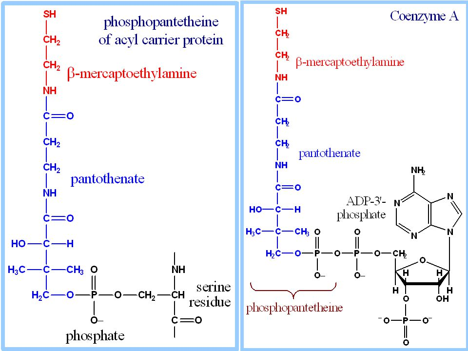 Metilmalonik asidemi ve asidürinin 2 tipi vardır: Metilmalonil CoA mutaz eksikliği Vit B12'nin koenzim formuna dönüşüm bozukluğu.