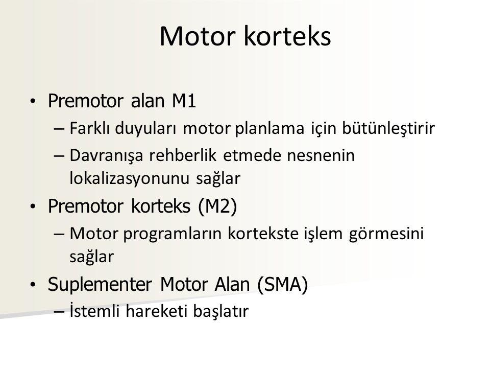 Motor korteks Premotor alan M1 – Farklı duyuları motor planlama için bütünleştirir – Davranışa rehberlik etmede nesnenin lokalizasyonunu sağlar Premot