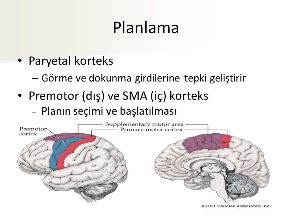 Planlama Paryetal korteks – Görme ve dokunma girdilerine tepki geliştirir Premotor (dış) ve SMA (iç) korteks – Planın seçimi ve başlatılması
