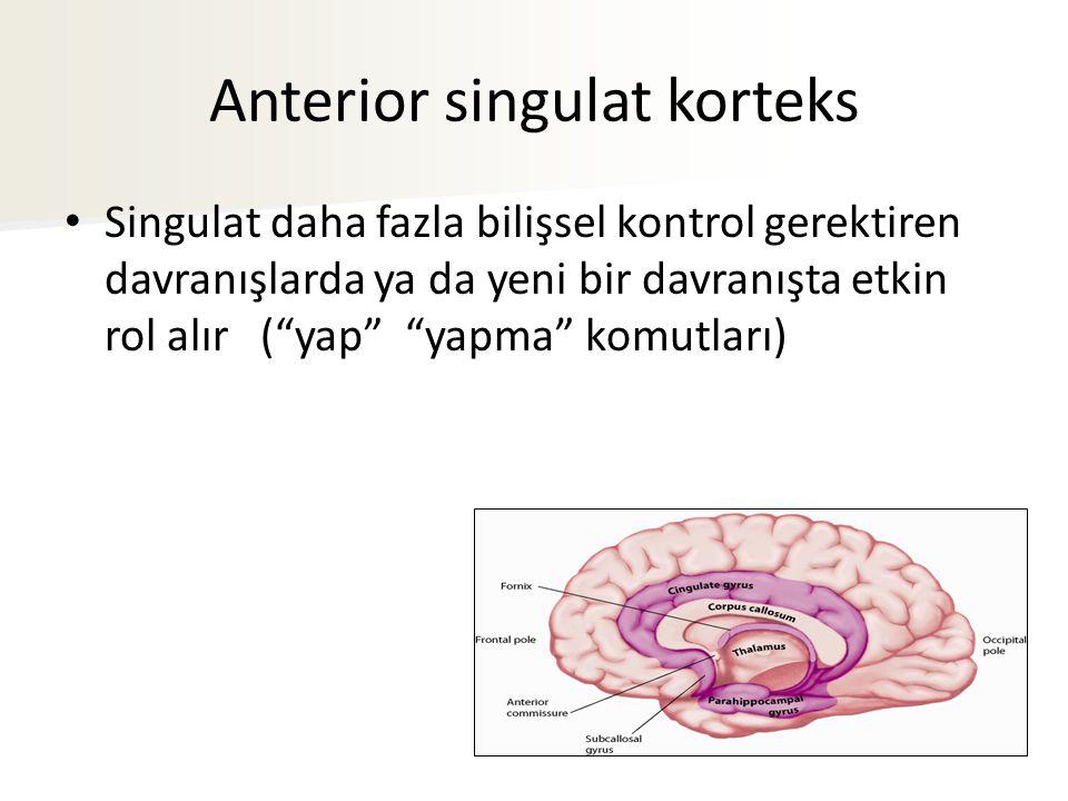 """Anterior singulat korteks Singulat daha fazla bilişsel kontrol gerektiren davranışlarda ya da yeni bir davranışta etkin rol alır (""""yap"""" """"yapma"""" komutl"""