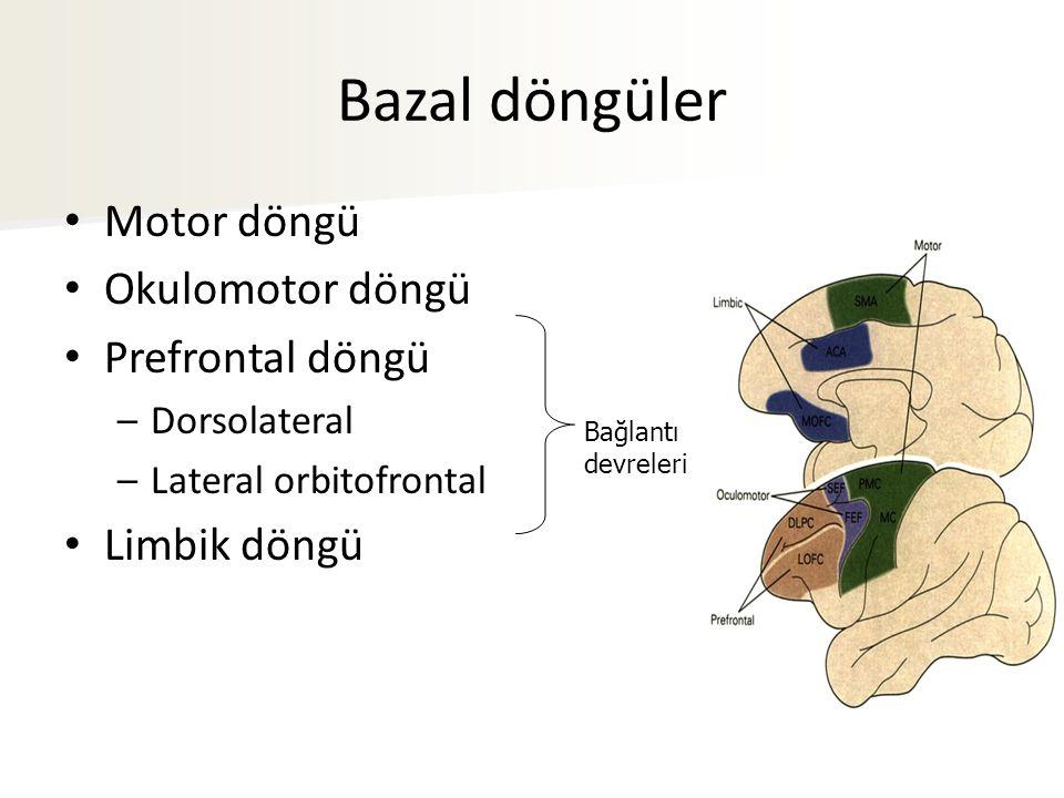 Bağlantı devreleri Bazal döngüler Motor döngü Okulomotor döngü Prefrontal döngü –Dorsolateral –Lateral orbitofrontal Limbik döngü