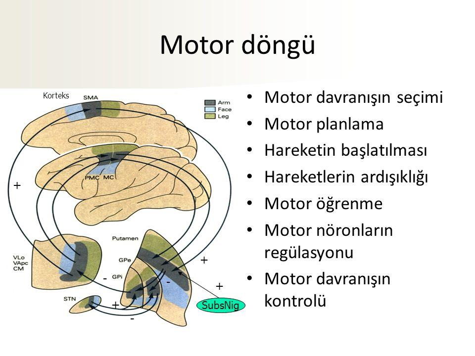 + - - + - + SubsNig + Korteks Motor döngü Motor davranışın seçimi Motor planlama Hareketin başlatılması Hareketlerin ardışıklığı Motor öğrenme Motor n