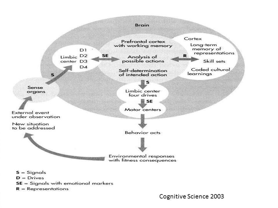 Bazal gangliyonlar Motor davranışın seçimi Bir hareketten diğerine geçiş Karşı tarafın hareketlerinin kontrolü Duygu ve düşüncelerin kontrolü Hareketlerin ve duyguların bellekte depolanması