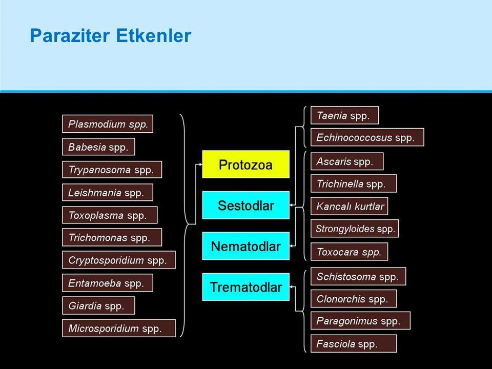 Entamoeba histolytica Amipli dizanteri etkeni protozoon