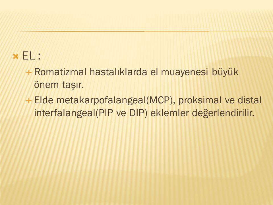  EL :  Romatizmal hastalıklarda el muayenesi büyük önem taşır.  Elde metakarpofalangeal(MCP), proksimal ve distal interfalangeal(PIP ve DIP) ekleml