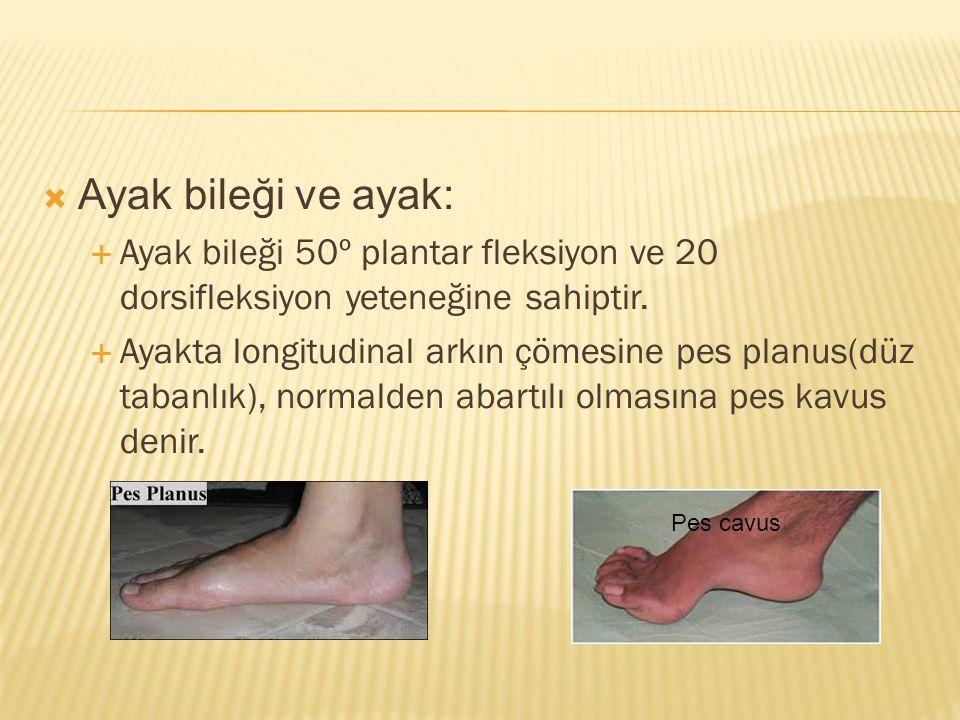  Ayak bileği ve ayak:  Ayak bileği 50º plantar fleksiyon ve 20 dorsifleksiyon yeteneğine sahiptir.  Ayakta longitudinal arkın çömesine pes planus(d