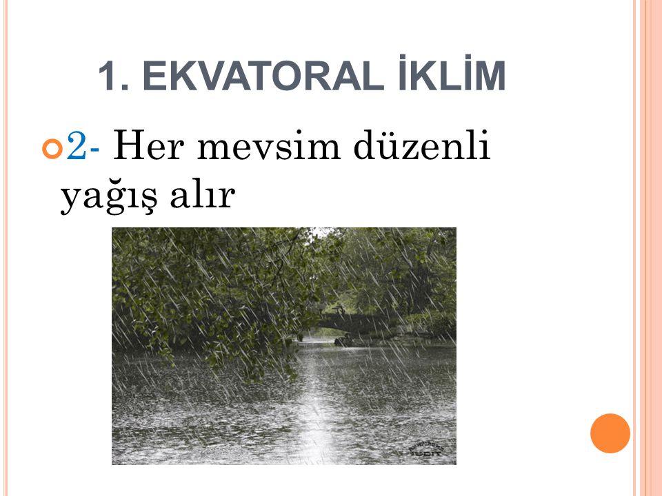 1. EKVATORAL İKLİM 3- Güneş ışınlarının dik geldiği yaz dönemi Konveksiyonel yağışlar görülür.