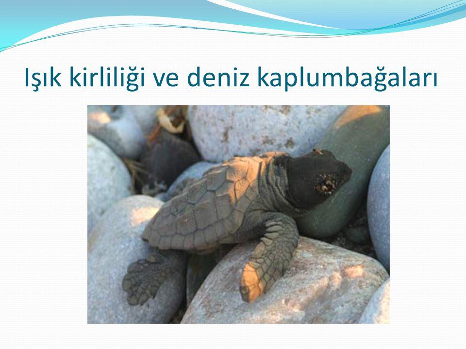 Işık kirliliği ve deniz kaplumbağaları