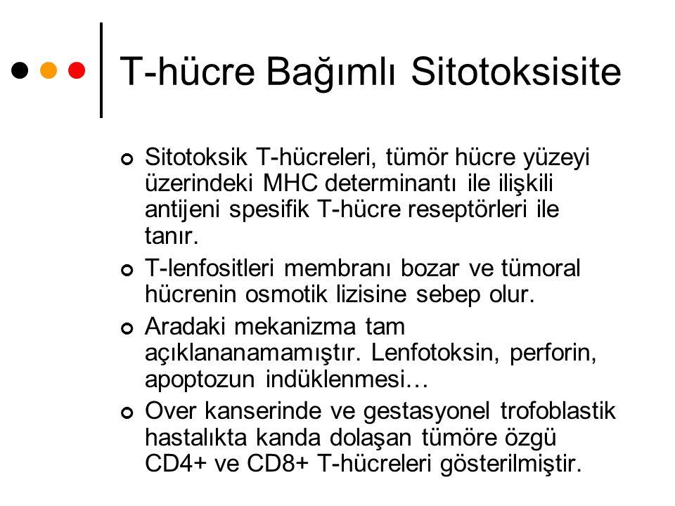 T-hücre Bağımlı Sitotoksisite Sitotoksik T-hücreleri, tümör hücre yüzeyi üzerindeki MHC determinantı ile ilişkili antijeni spesifik T-hücre reseptörle