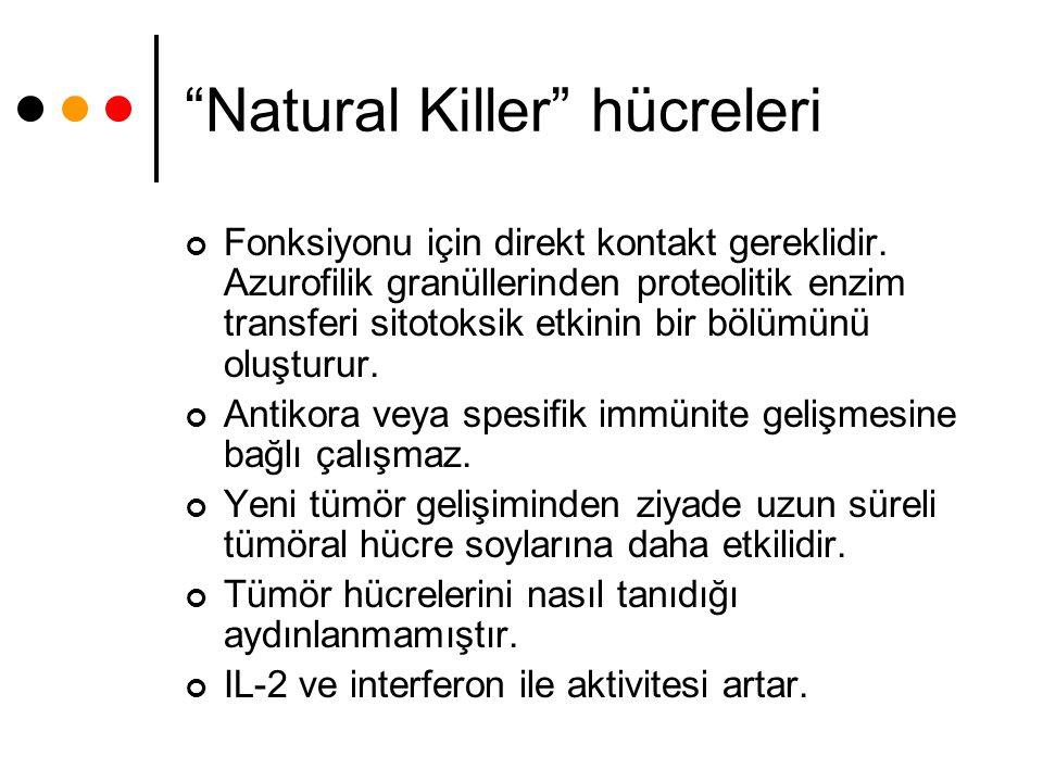 """""""Natural Killer"""" hücreleri Fonksiyonu için direkt kontakt gereklidir. Azurofilik granüllerinden proteolitik enzim transferi sitotoksik etkinin bir böl"""