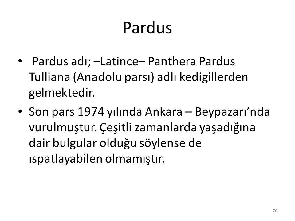 Pardus Pardus adı; –Latince– Panthera Pardus Tulliana (Anadolu parsı) adlı kedigillerden gelmektedir. Son pars 1974 yılında Ankara – Beypazarı'nda vur