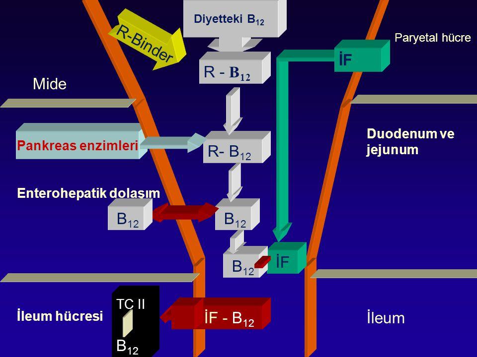 Mide Enterohepatik dolaşım İleum hücresi Pankreas enzimleri Paryetal hücre Duodenum ve jejunum Diyetteki B 12 R-Binder R - B 12 B 12 İF B 12 İF - B 12