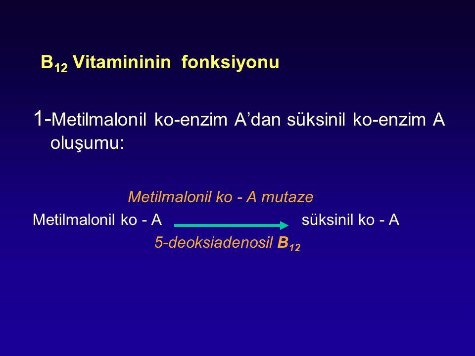 B 12 Vitamininin fonksiyonu 1- Metilmalonil ko-enzim A'dan süksinil ko-enzim A oluşumu: Metilmalonil ko - A mutaze Metilmalonil ko - A süksinil ko - A