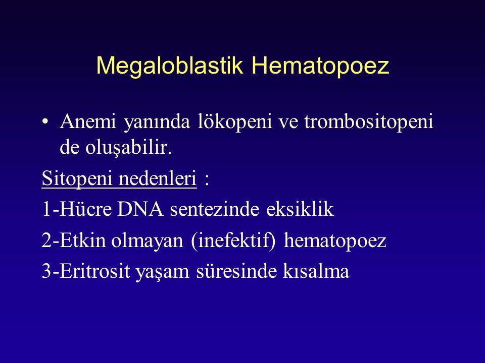Megaloblastik Hematopoez Anemi yanında lökopeni ve trombositopeni de oluşabilir. Sitopeni nedenleri : 1-Hücre DNA sentezinde eksiklik 2-Etkin olmayan