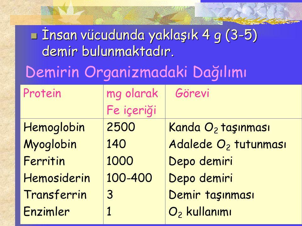 Demirin Organizmadaki Dağılımı Proteinmg olarak Fe içeriği Görevi Hemoglobin Myoglobin Ferritin Hemosiderin Transferrin Enzimler 2500 140 1000 100-400