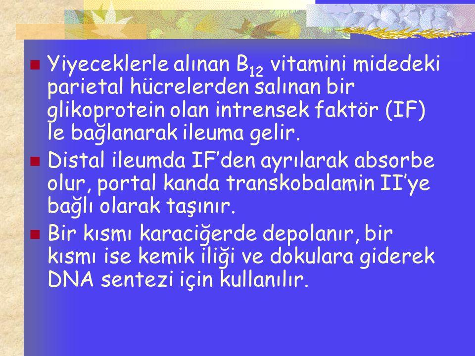 Yiyeceklerle alınan B 12 vitamini midedeki parietal hücrelerden salınan bir glikoprotein olan intrensek faktör (IF) le bağlanarak ileuma gelir. Distal