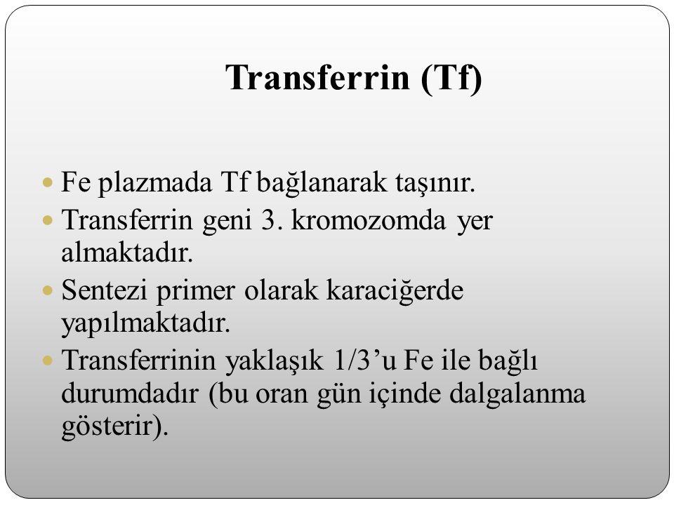 Transferrin (Tf) Fe plazmada Tf bağlanarak taşınır. Transferrin geni 3. kromozomda yer almaktadır. Sentezi primer olarak karaciğerde yapılmaktadır. Tr