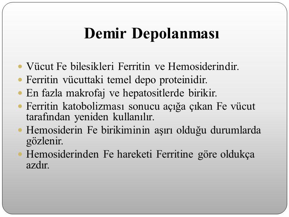 Demir Depolanması Vücut Fe bilesikleri Ferritin ve Hemosiderindir. Ferritin vücuttaki temel depo proteinidir. En fazla makrofaj ve hepatositlerde biri