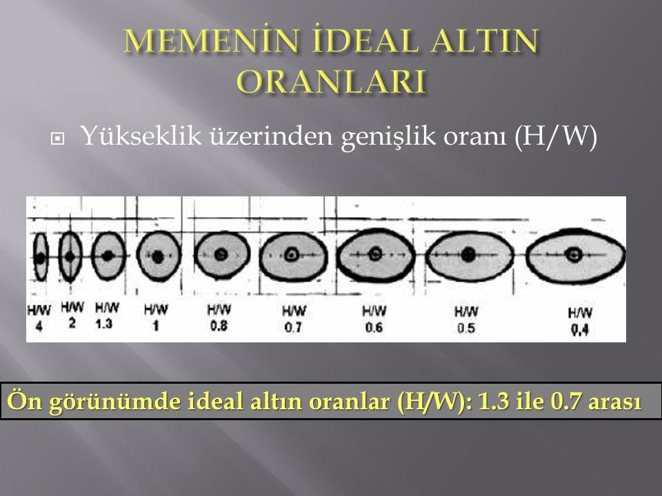  Yükseklik üzerinden genişlik oranı (H/W) Ön görünümde ideal altın oranlar (H/W): 1.3 ile 0.7 arası