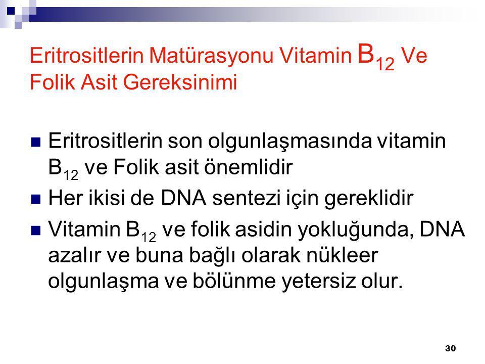 30 Eritrositlerin Matürasyonu Vitamin B 12 Ve Folik Asit Gereksinimi Eritrositlerin son olgunlaşmasında vitamin B 12 ve Folik asit önemlidir Her ikisi