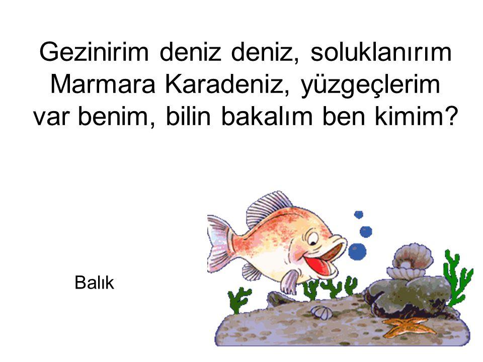 Gezinirim deniz deniz, soluklanırım Marmara Karadeniz, yüzgeçlerim var benim, bilin bakalım ben kimim? Balık