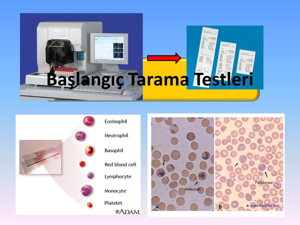 Başlangıç Tarama Testleri