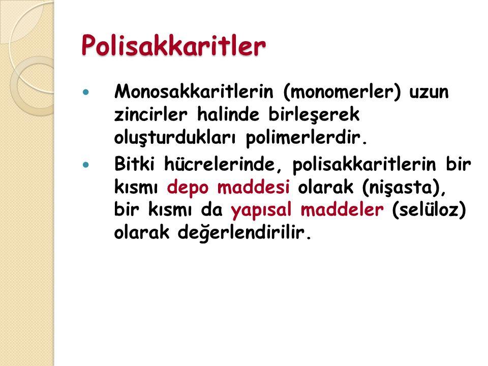 Polisakkaritler Monosakkaritlerin (monomerler) uzun zincirler halinde birleşerek oluşturdukları polimerlerdir.