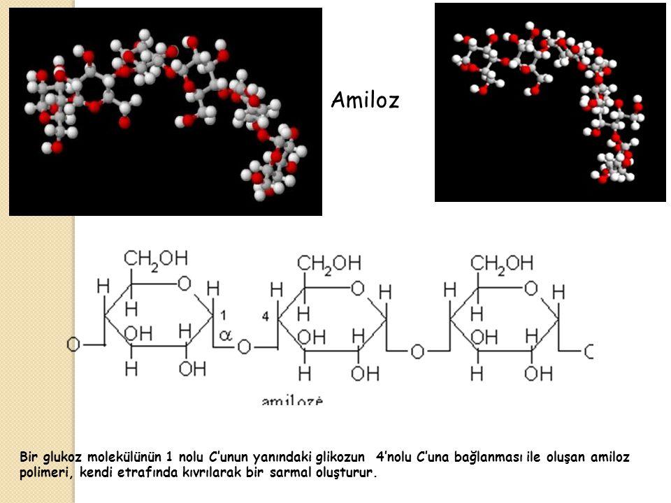 Amiloz Bir glukoz molekülünün 1 nolu C'unun yanındaki glikozun 4'nolu C'una bağlanması ile oluşan amiloz polimeri, kendi etrafında kıvrılarak bir sarmal oluşturur.