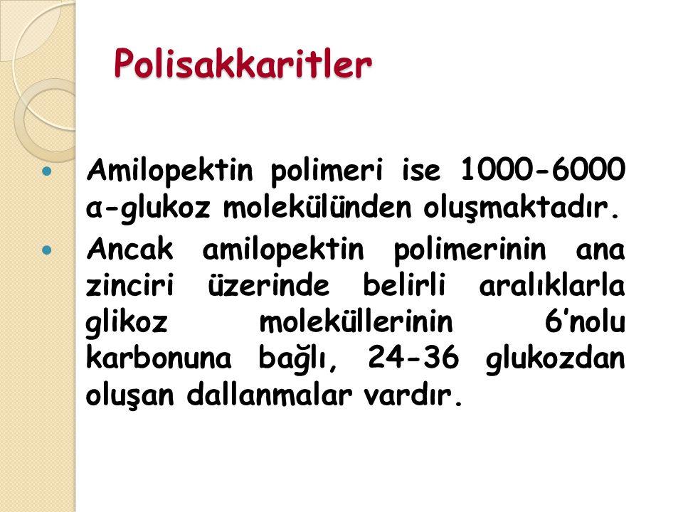 Polisakkaritler Amilopektin polimeri ise 1000-6000 α-glukoz molekülünden oluşmaktadır.